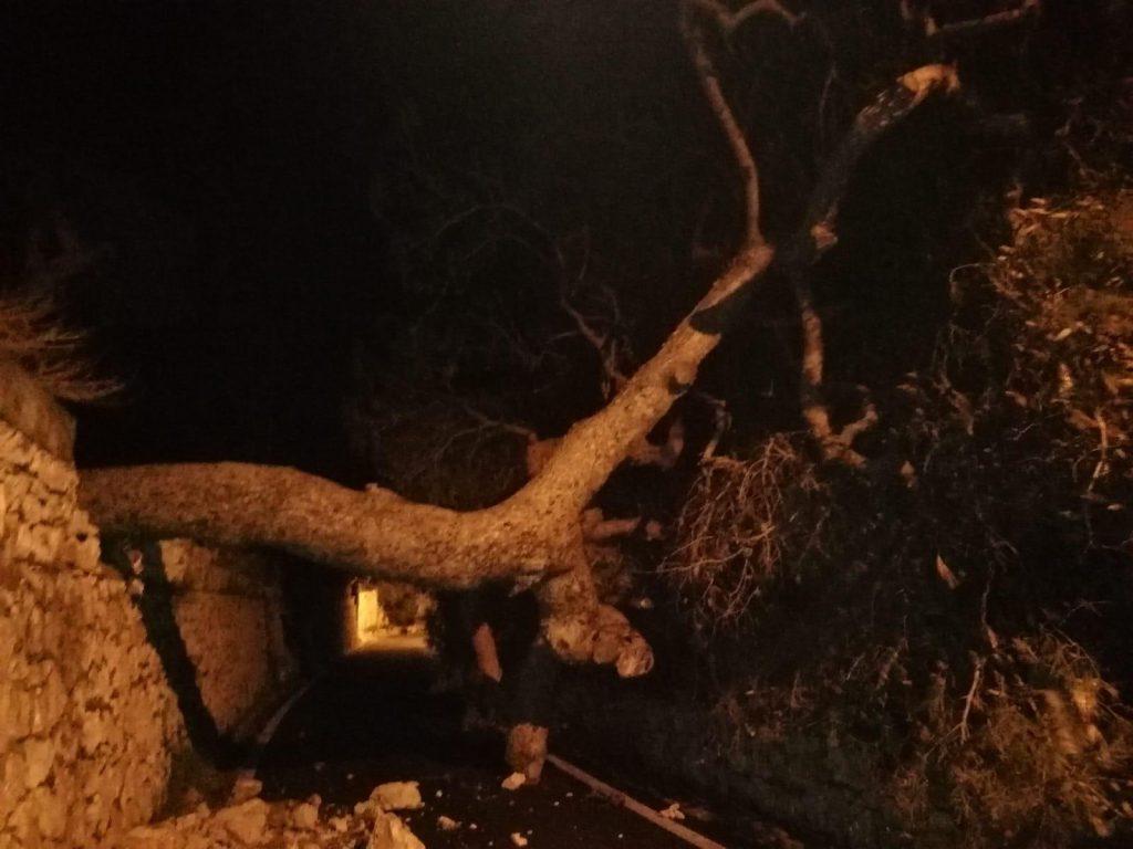 Bufera di Santa Lucia a Capri: cade grosso albero in via Marina Piccola, strada chiusa