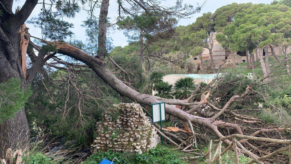 La conta dei danni dopo l'ondata di maltempo dei giorni scorsi a Capri: strage di alberi ovunque. La situazione a Tiberio: foto e video