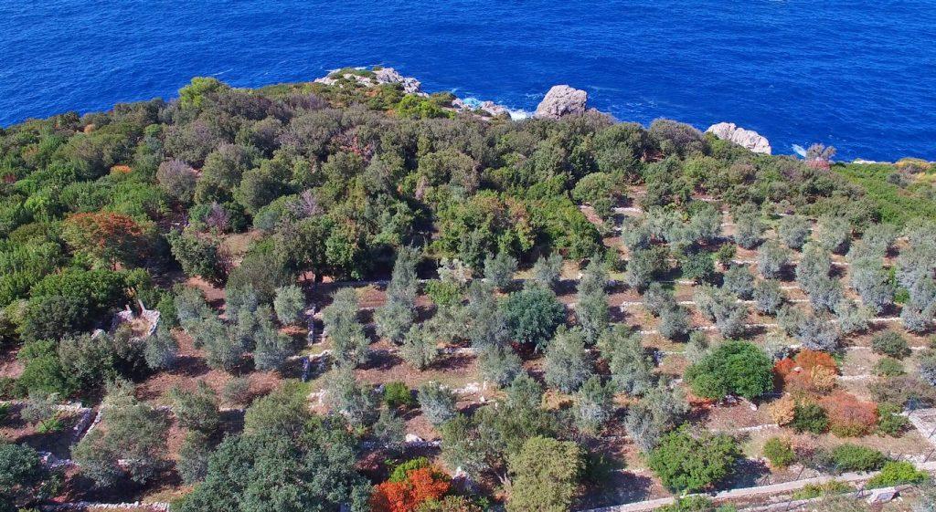 Ad Anacapri con l'Oro di Capri la ripresa parte dalla terra, l'oro verde nella guida slow food