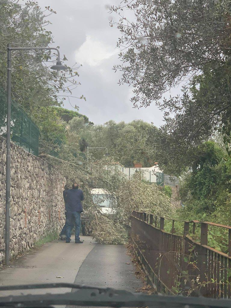 Maltempo ad Anacapri: alberi danneggiati e tabelloni pubblicitari abbattuti dal vento, black out elettrici. Foto e video